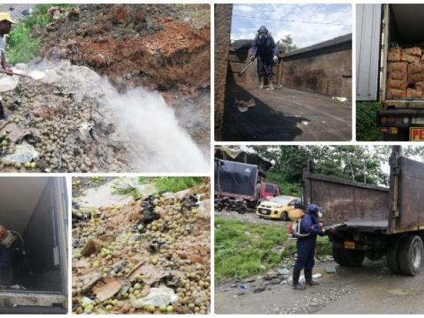 ICA denuncia que en Buenaventura desenterraron pera que no cumplía con normas