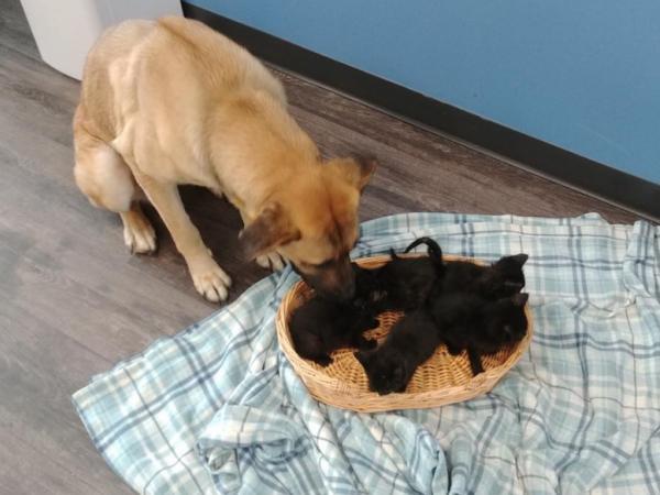 Perro cuidaba gatos en Canadá