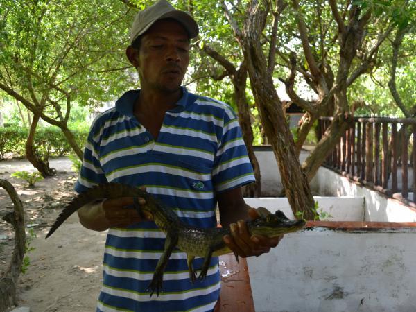 Caimán Aguja