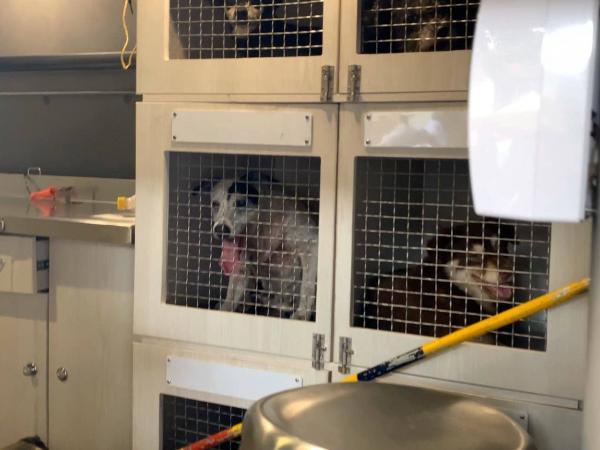 Rescatan a perros y gatos