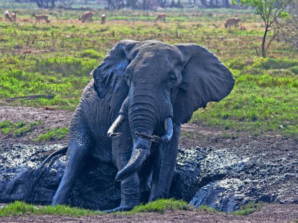 Parque de los elefantes de Tembe