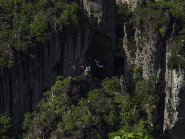 Parque Nacional Serranía de Chiribiquete