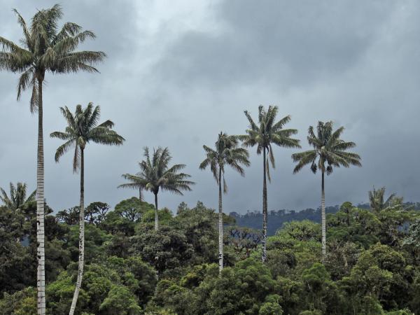 Parque Nacional Natural Complejo Volcánico Doña Juana-Cascabel