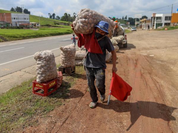 Crisis de la papa: Estas son las verdaderas causas de la crisis de los  papicultores de Boyacá - Otras Ciudades - Colombia - ELTIEMPO.COM