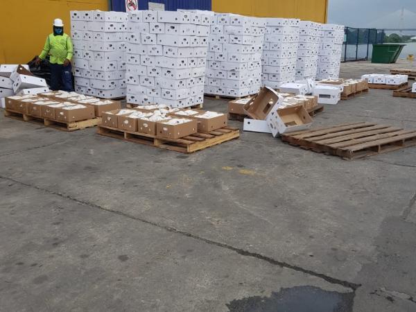 Además de la venta, el proceso de capacitación y formación les permitió a los excombatientes mejorar para continuar siendo parte de más exportaciones a futuro.