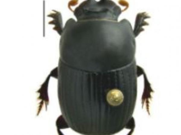 Escarabajo miniatura