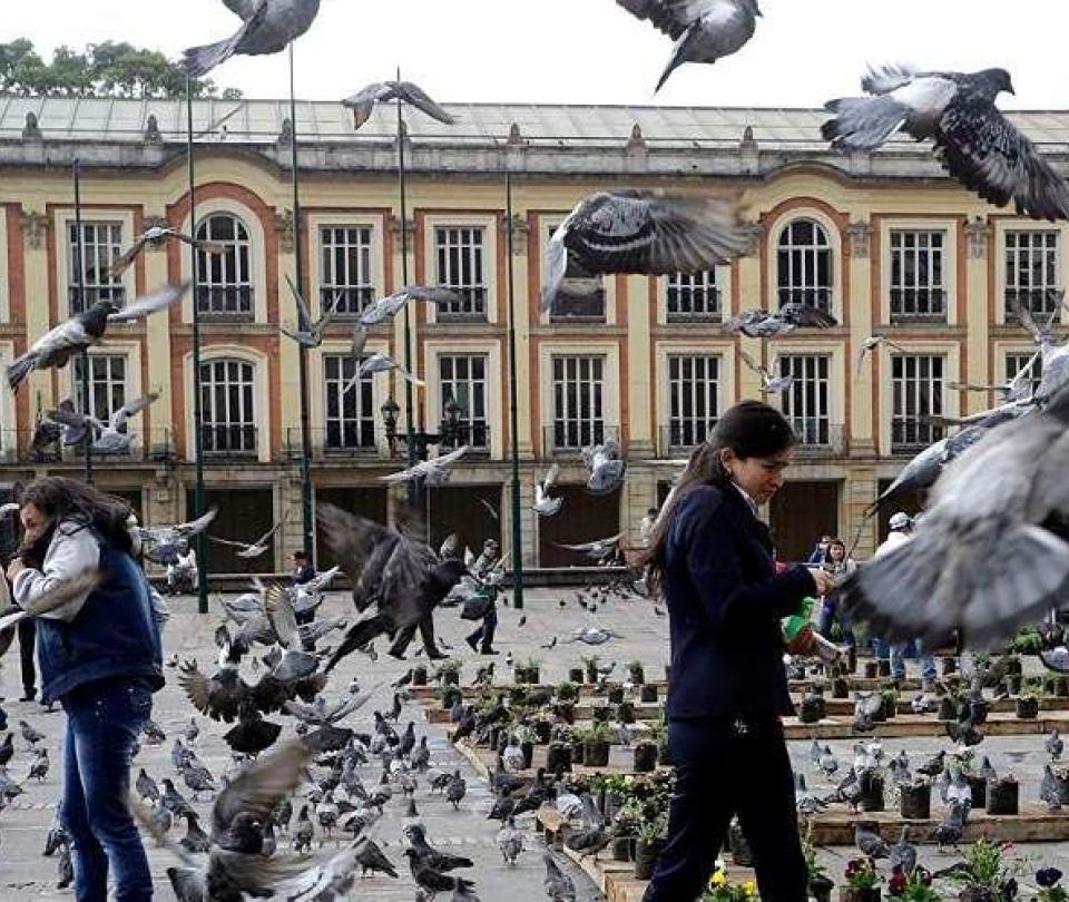 'La solución no es eliminar las palomas sino controlarlas'