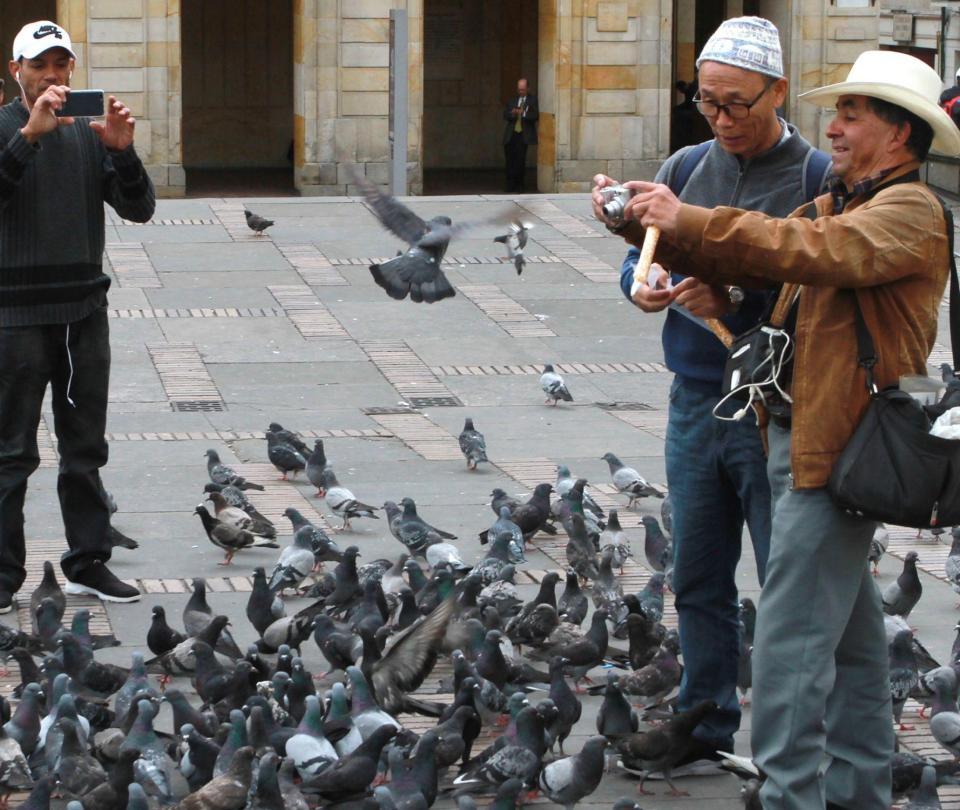 'Las palomas son transmisoras de enfermedades virales'