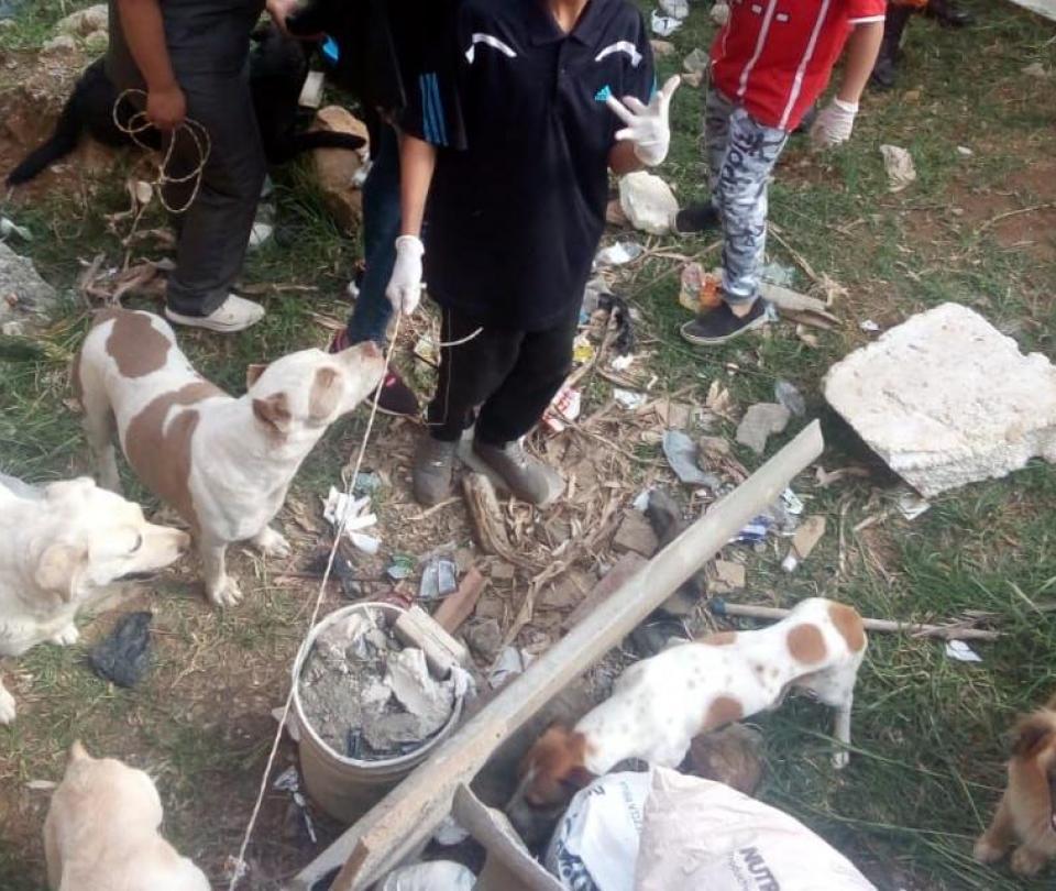 Denuncian envenenamiento masivo de perros en Yarumal, Antioquia
