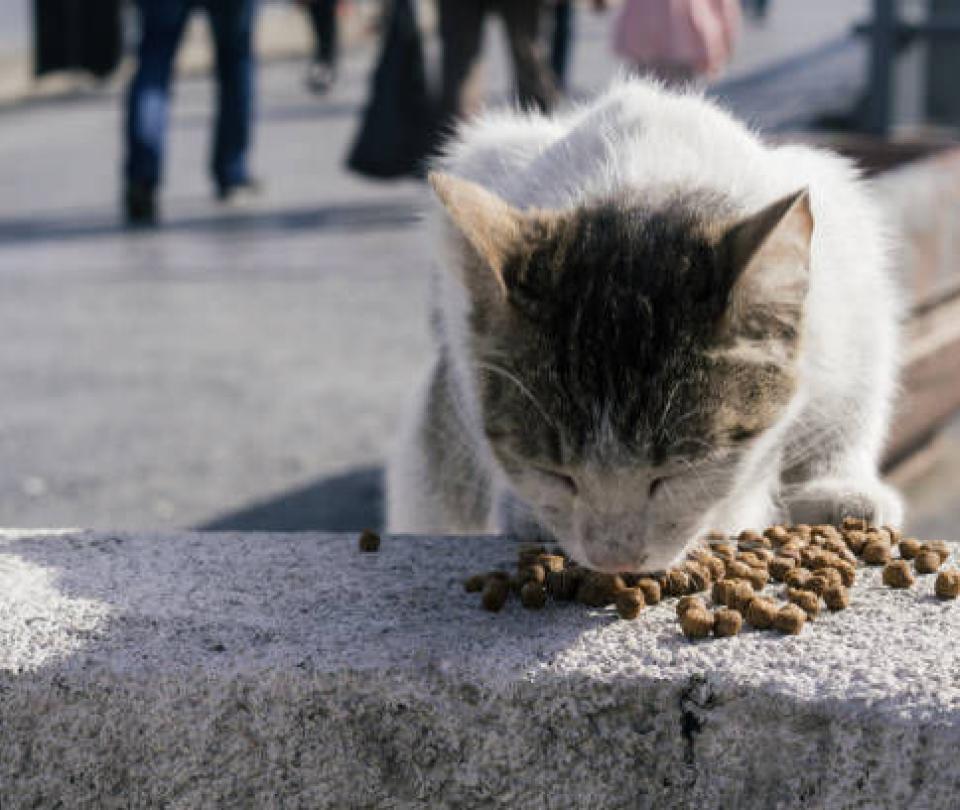 La gata de dos patas que ha cautivado en redes sociales