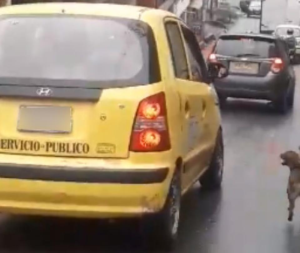 Adoptan a perro que persiguió por 20 cuadras taxi donde iría su dueña