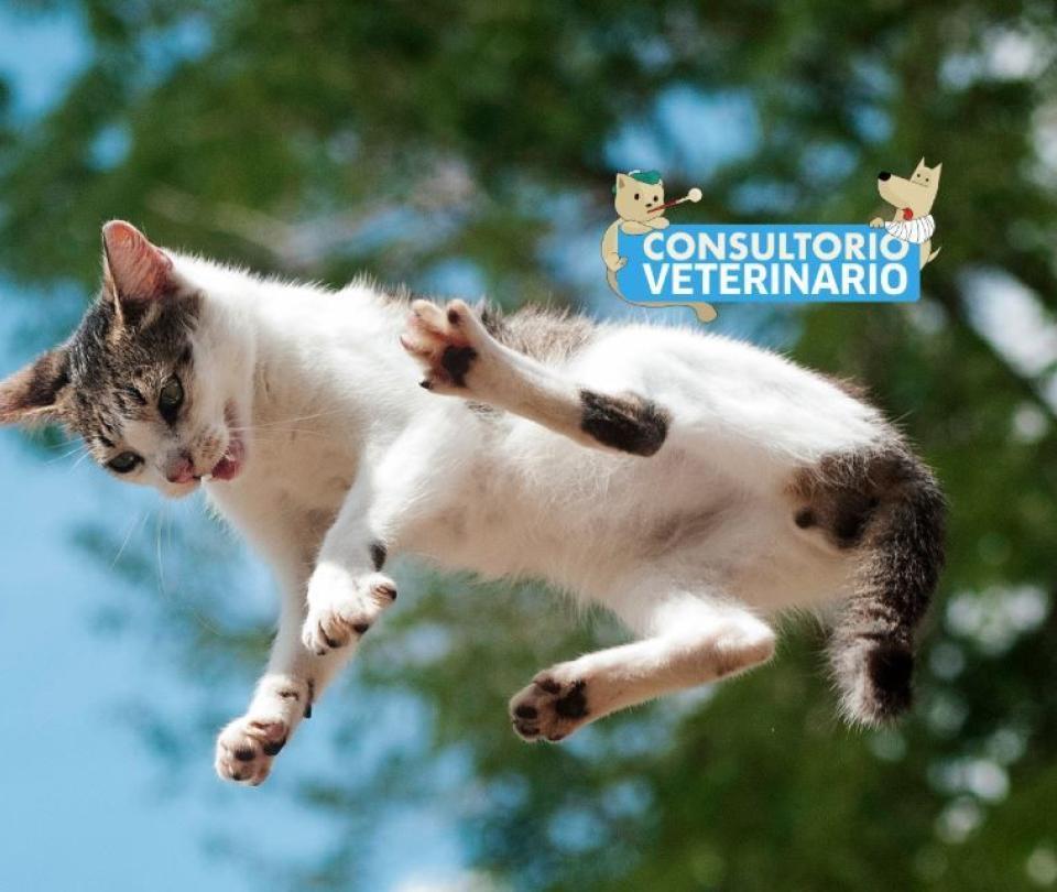 ¿Su gato suele escaparse de casa? Tenga cuidado y siga estos consejos