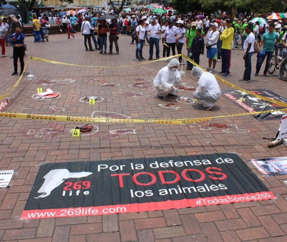 Defensa Animal celebró el Día Mundial sin carne en Cali