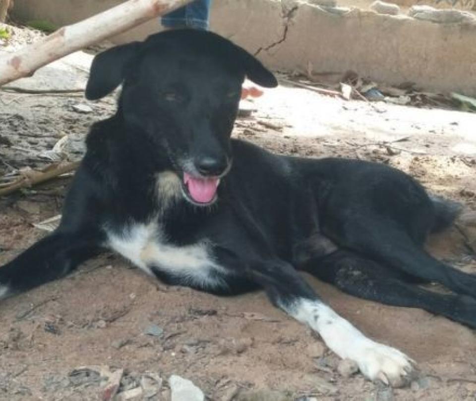 El perro 'héroe' que rescató a bebé que su madre había enterrado vivo