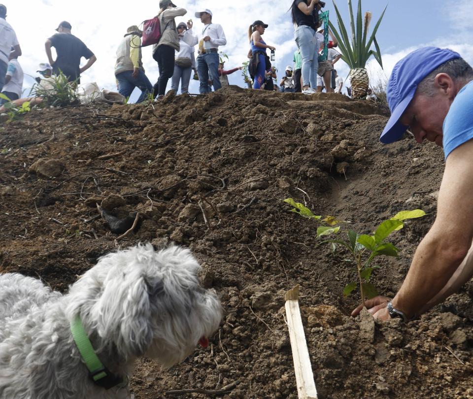 Comenzó la primera siembra de árboles en el Cerro de las Tres Cruces