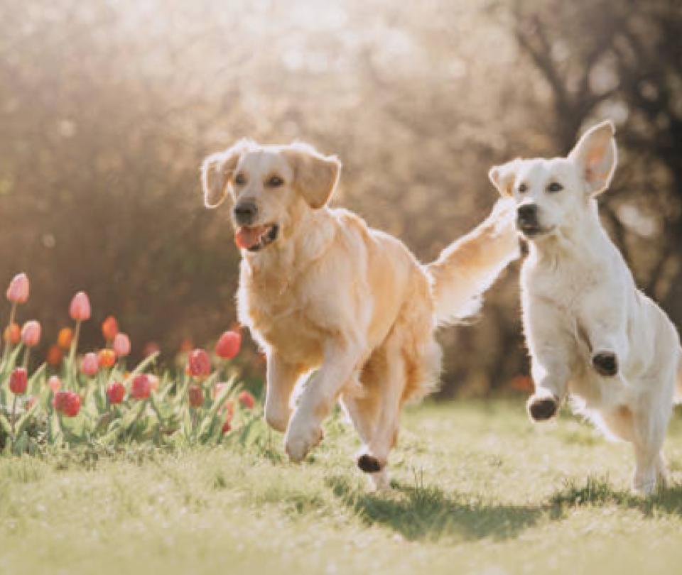 Podrían prohibir el ingreso de mascotas a parques de Bucaramanga