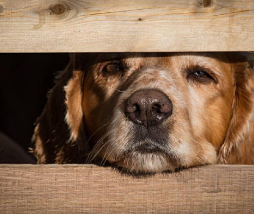 Crean plataforma para denunciar maltrato animal en línea