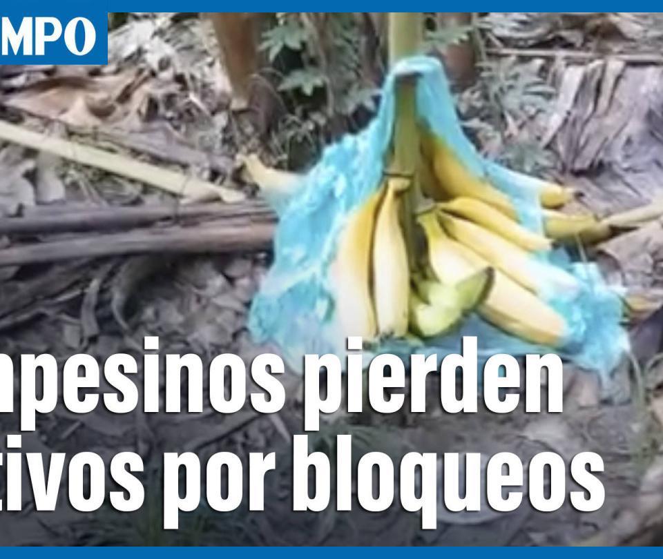 Campesinos del Meta están perdiendo sus cultivos por los bloqueos