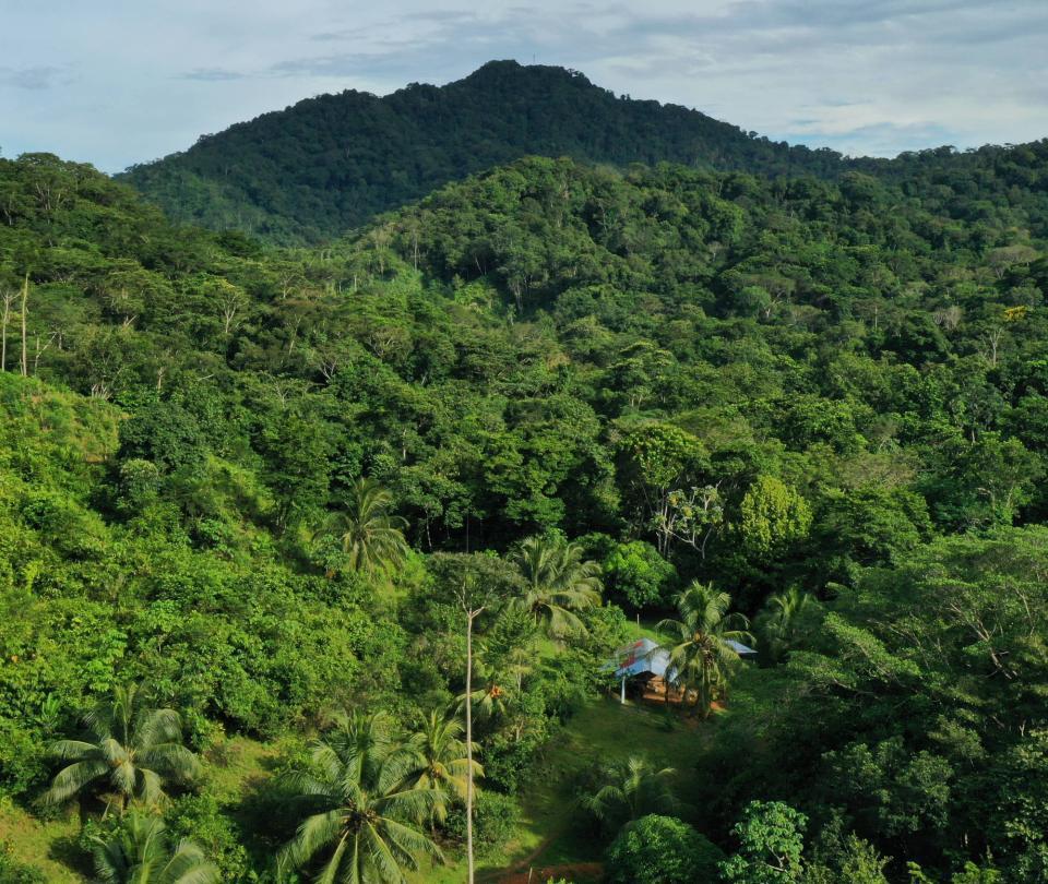 Encuentran cadáveres de posibles migrantes haitianos en selva del Darién