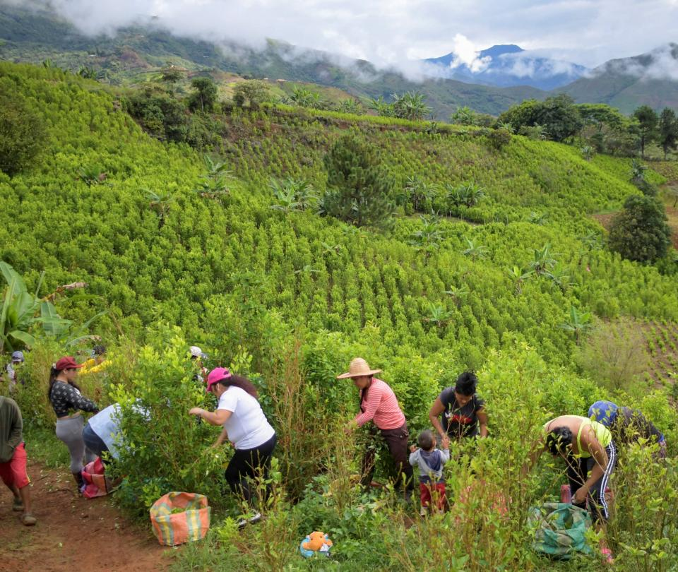 Viaje a las tierras de 'San coca'