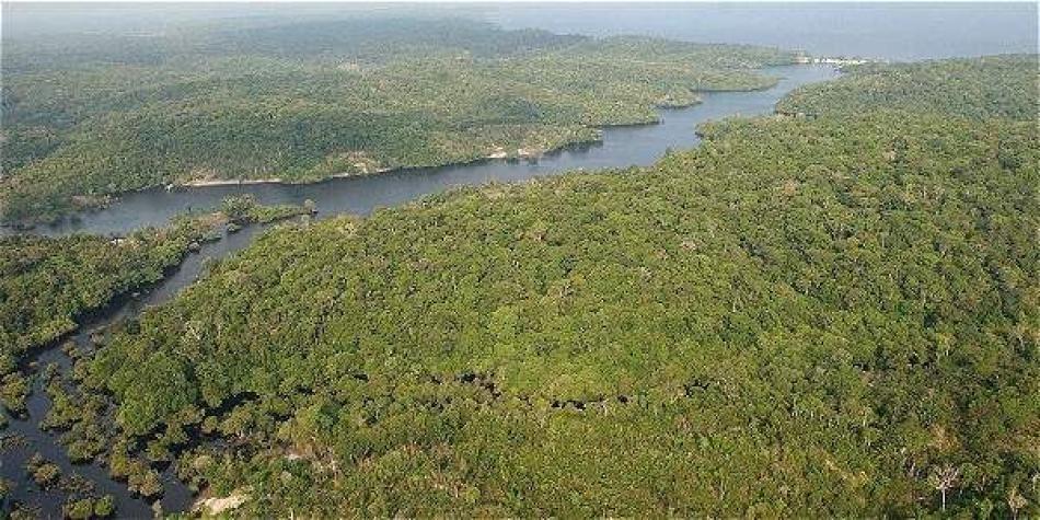 Amazonia perdió área del tamaño de Bogotá