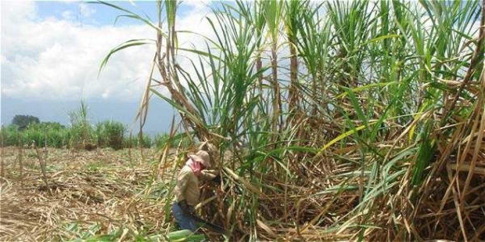 Procaña agradece al Gobierno por salvar del colapso a sector azucarero