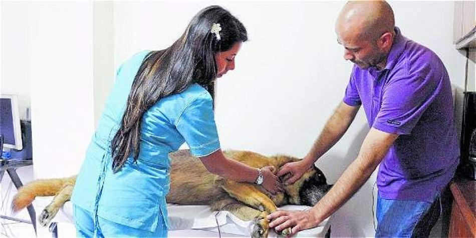 Avanza proyecto para que Soat cubra accidentes con animales