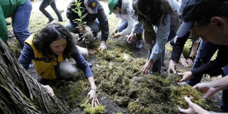 50421a32d24 Un grupo de jóvenes resiembra musgo en los cerros orientales de Bogotá.  Había sido decomisado.