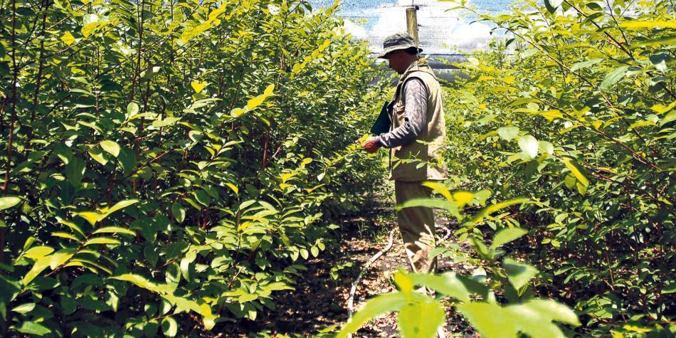 La paz es insostenible mientras exista el narcotráfico — Colombia alerta