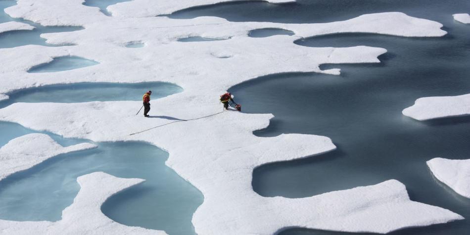 Focas y ballenas del Ártico modifican su dieta por el cambio climático