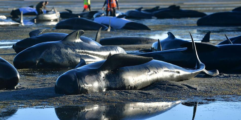 Los mares podrían tener más plástico que peces en 2050 — ONU