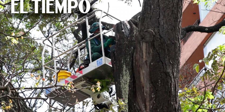 https://www eltiempo com/colombia/cali/conductor-atropella-a