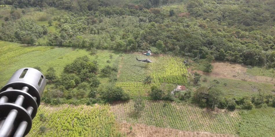Colombia: Cultivos de coca aumentan en 52%