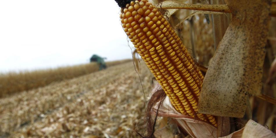 Posible fraude por $ 1,25 billones con maíz traído por TLC