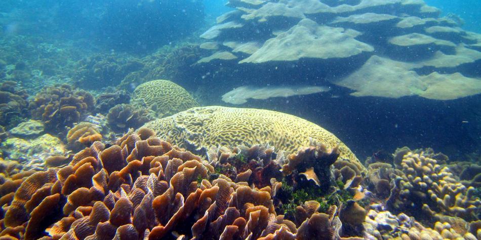Columna en defensa del arrecife de Varadero, en Cartagena - Medio ...