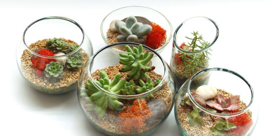 Cómo es el cuidado de la plantas \'suculentas\' - Gente - Cultura ...