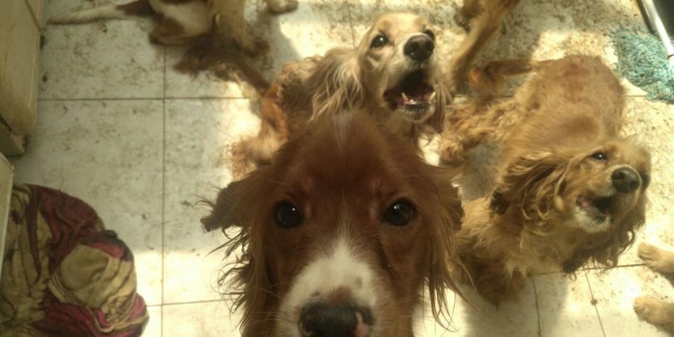 Rescatan a 57 perros que sufrían maltrato y hacinamiento en Kennedy