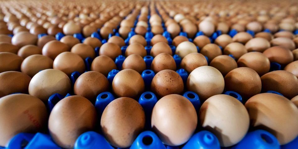 'Huevos Santa Rita' anunció que dejará docena de huevos a $ 1.800