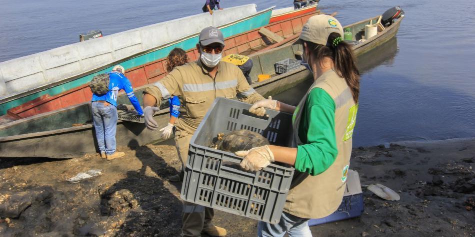 ¿Por qué en Semana Santa se dispara el tráfico de tortugas e iguanas?