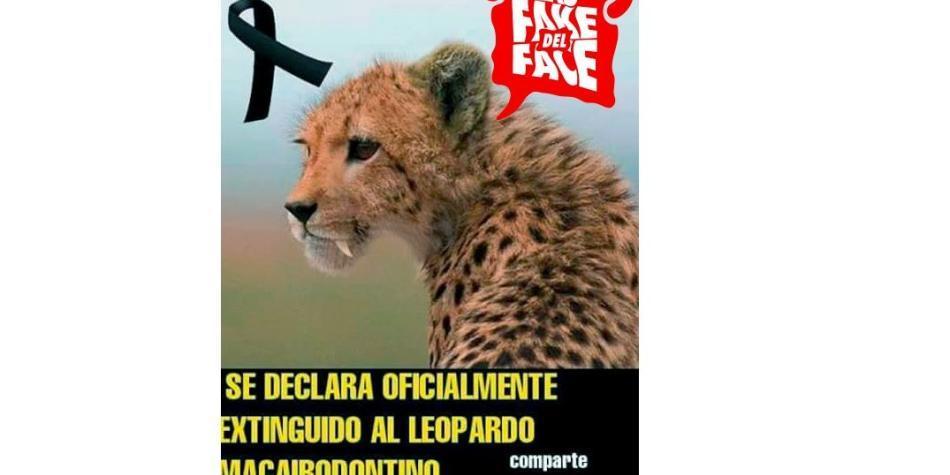 La Falsa Cadena Del Leopardo Macairidontiano Que Se Extinguió En América Ciencia Vida Eltiempo Com