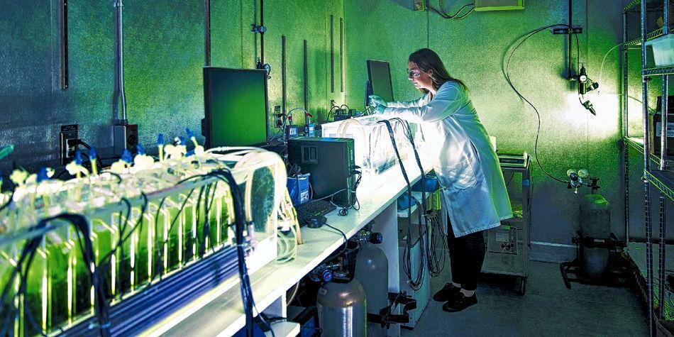 Biocombustibles a partir de las algas