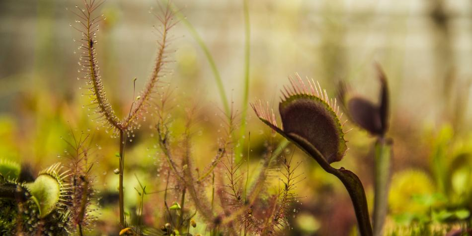 Las plantas están desapareciendo a una velocidad nunca antes vista