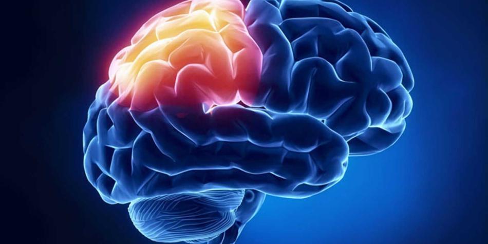 Descubren que inhibir el sistema nervioso puede ayudar en cardiopatías