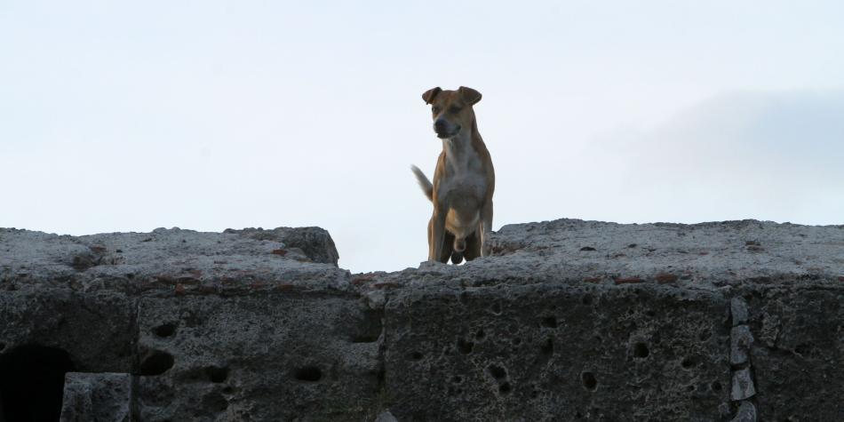 Polémica por policía que le disparó a un perro en Armenia