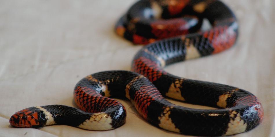 Joven fue a su primer día de clase y lo mordió una temida serpiente