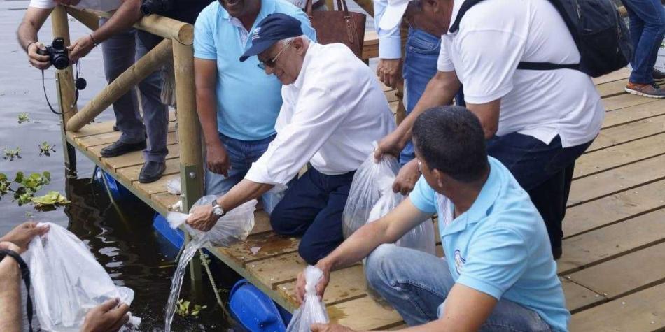 CVC y FAC sembrarán 30.000 bocachicos ante crisis por Hidroituango