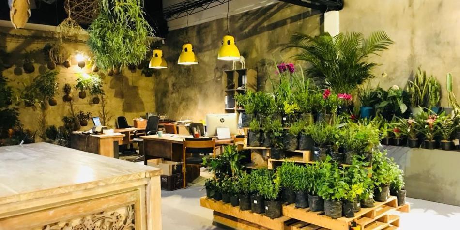 Las plantas exóticas de Calyx