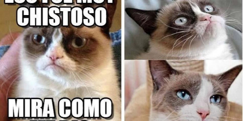 Memes De Grumpy Cat Murió La Gata Más Famosa De Internet