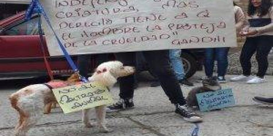 Marcha y protesta por abuso sexual contra una canina preñada