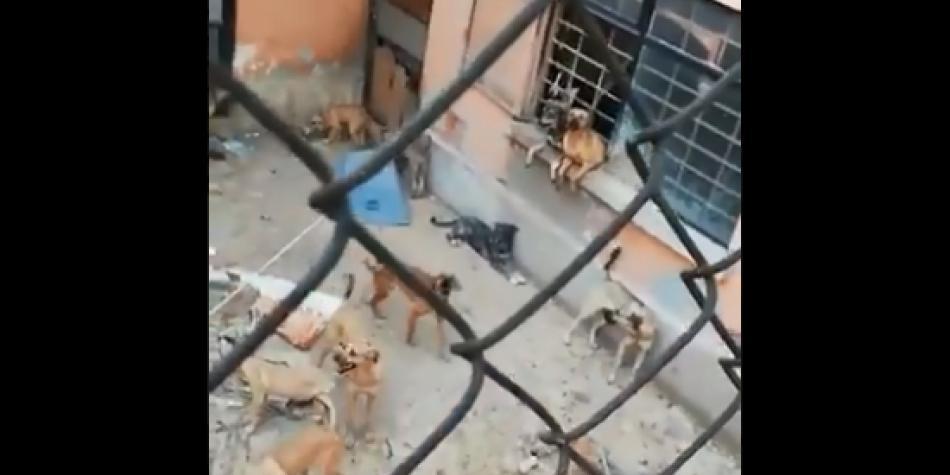 55 perros abandonados recurrieron al canibalismo para sobrevivir